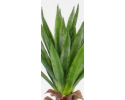 Yucca Small Verde H. Cm. 50