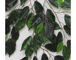 FICUS New Luxe Green