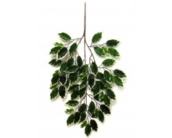 FICUS Luxe Spray Variegated