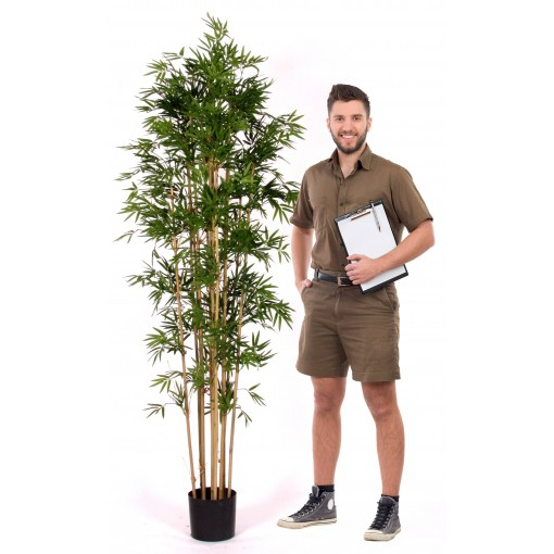 Japanese Bamboo Luxe - h. 210 cm.