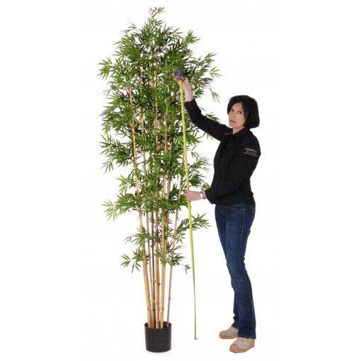 Japanese Bamboo Luxe - h. 240 cm.