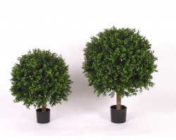 Boxwood in vari diametri