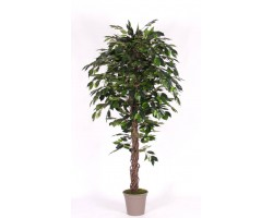 Ficus Artificiale Luxe Verde - Tronco Liana - In varie altezze