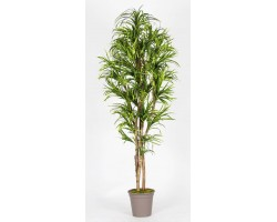 Dracena Artificiale variegata, foglie mini, in varie altezze, da 150 a 200 cm.