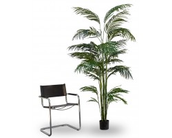 Areca Artificiale Tree, h. 210 cm.