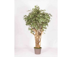 Ficus Artificiale Hawaiian Variegato, Tronco Tobago