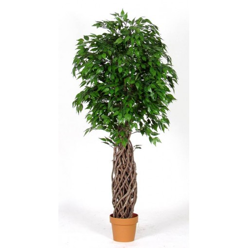 Ficus Artificiale Mini Verde Tronco Jumbo h. 155 cm.