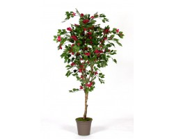 Bouganville Red New Garden - in varie Altezze da cm. 150 a cm. 210