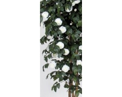 Camelia made in italy