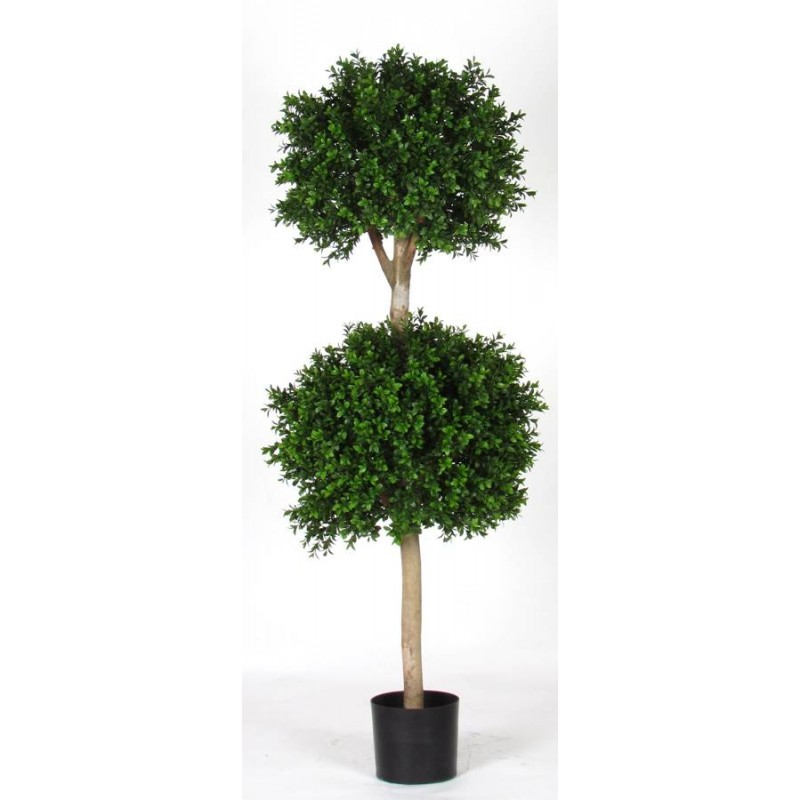 Boxwood 2 Ball con tronco vero