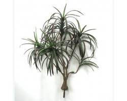 DRACENA MINI  Var.(Red/Green) x6br. H.90