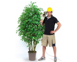 FICUS Foglia Mini Verde - Bosco Small