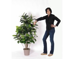 Ficus Artificiale Elastica Double h. 150 cm.
