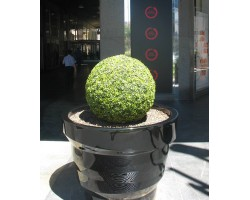 Sfera Boxwood in vari diametri